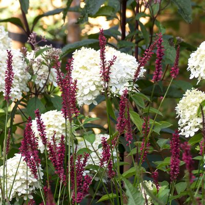 Sussex garden planting design