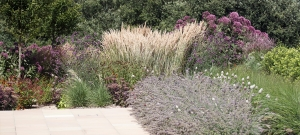big-groups-of-perennials-and-grasses-mike-harvey-gardens