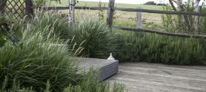 brighton-garden-ornamental-grasses