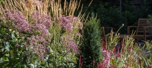 eupatorium-clamagrostis-veronicastrum-and-persicaria