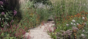 helenium-persicaria-eupatorium-and-miscanthus-planting