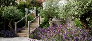 olive-trees-garden-design-brighton
