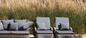 ornamental-grass-screen