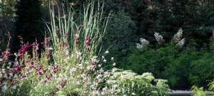 penstemon-panicum-gaura-and-sedum-in-sunlight
