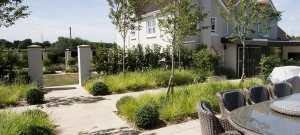 sesleria-massed-planting-under-amelanchier-trees