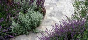 silver-and-purple-planting-with-silver-travertine-paving-brighton