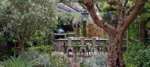 table-amongst-olive-trees-under-rose-pergola